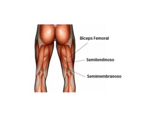 Estiramiento de los Músculos Isquiotibiales